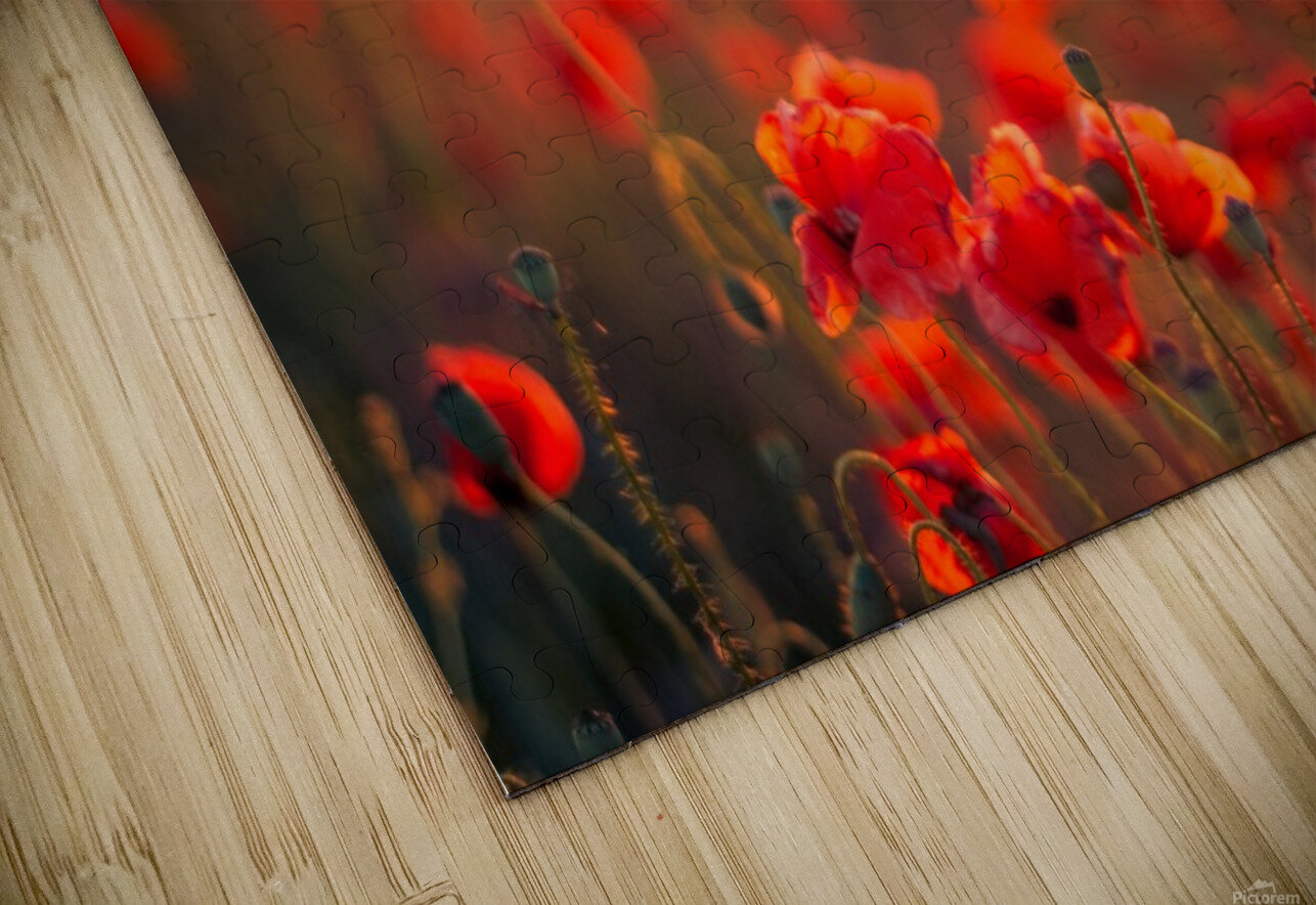 Beautiful Sunset poppy flowers HD Sublimation Metal print