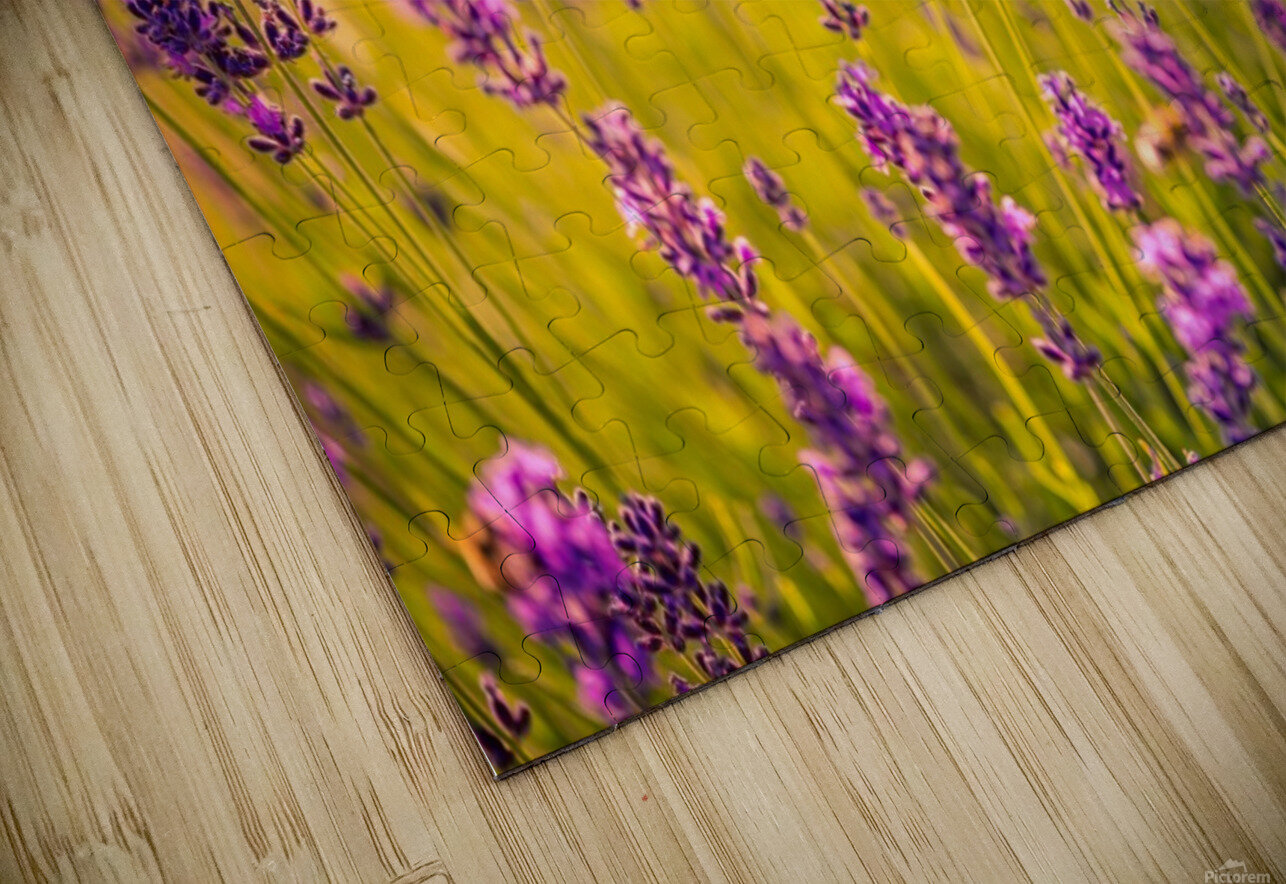 Beautiful Sunset lavender flowers HD Sublimation Metal print