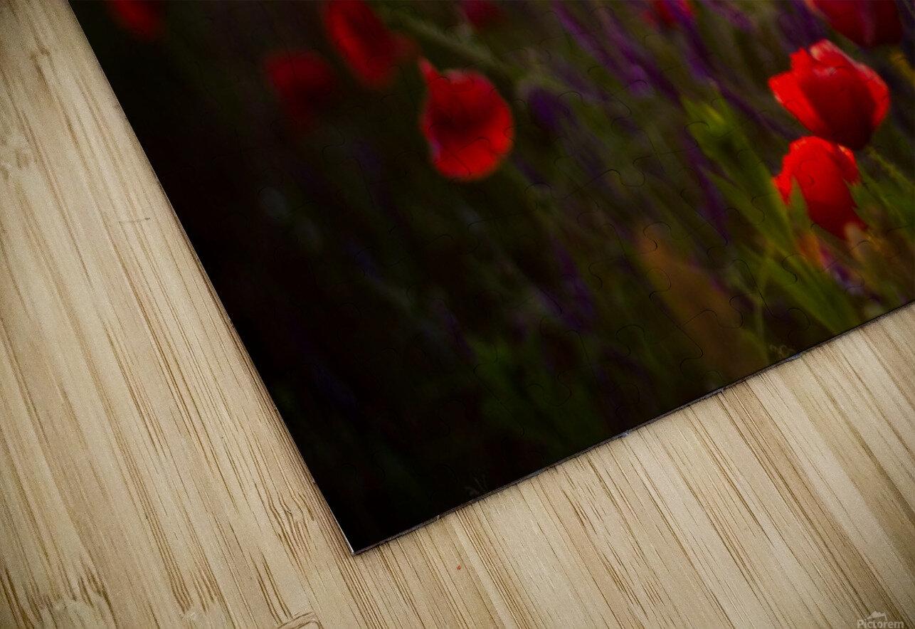Beautiful Sunset poppy flowers HD Sublimation Metal print
