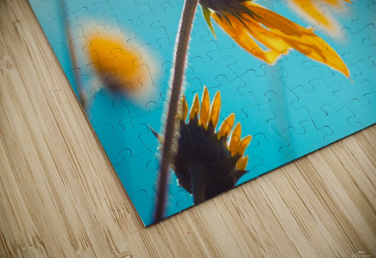 Yellow flowers and blue sky HD Sublimation Metal print
