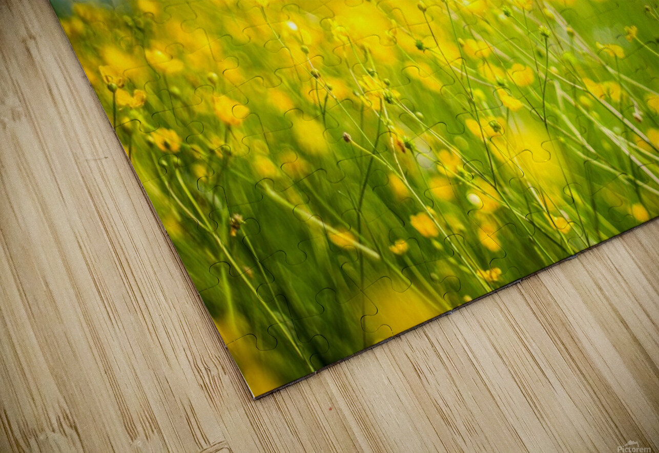 Summer flowers, yellow and blue HD Sublimation Metal print