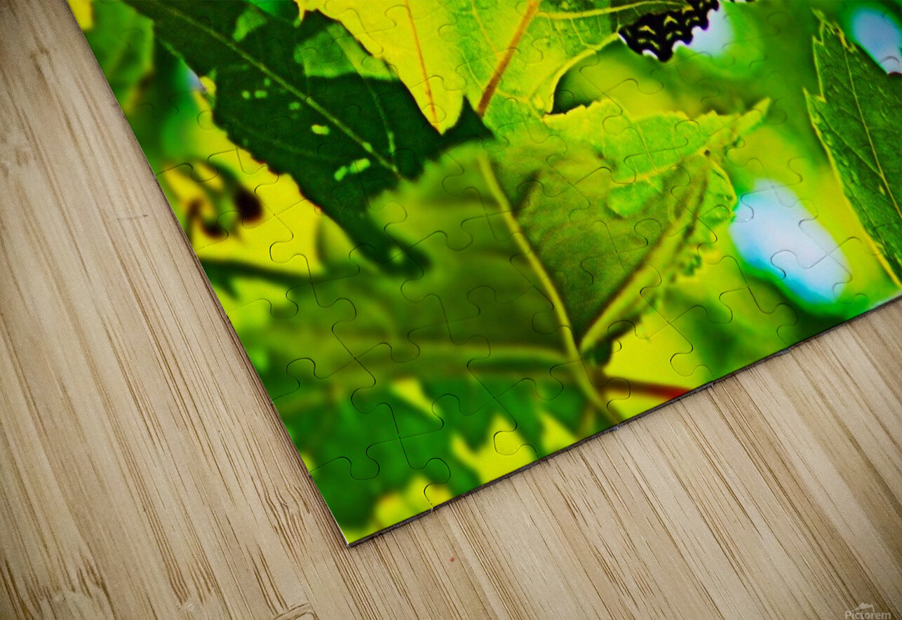 Resting on A Maple Leaf HD Sublimation Metal print