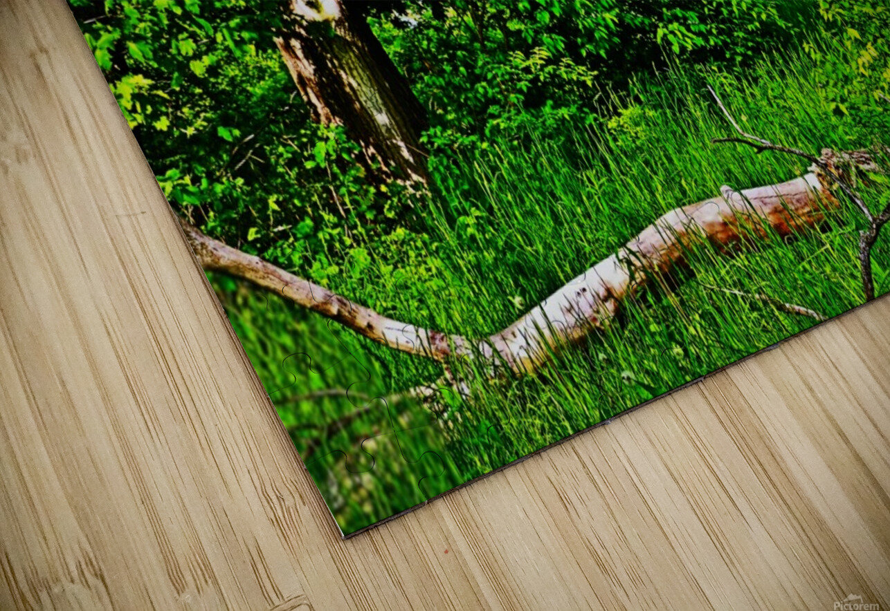 Life in the Shadows of the Trees HD Sublimation Metal print