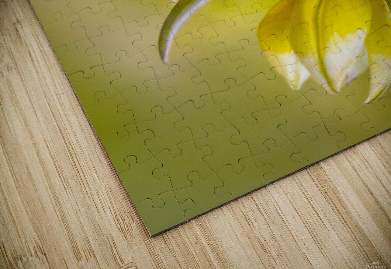 Tulipa HD Sublimation Metal print