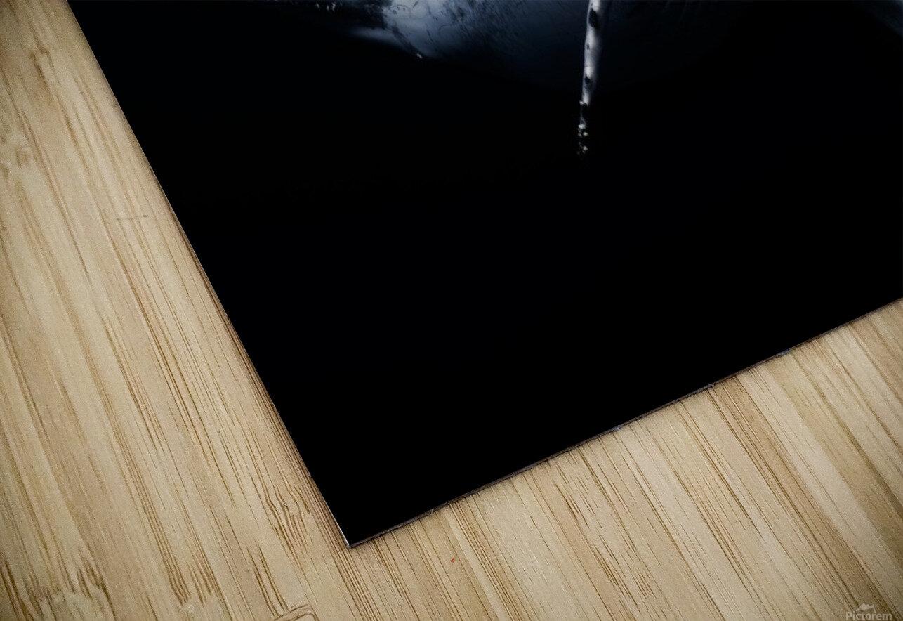 Black & Whale HD Sublimation Metal print