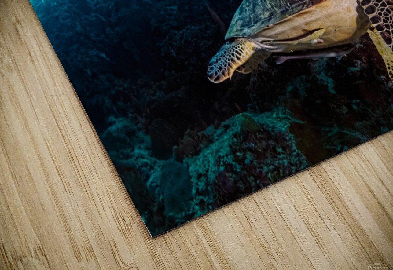 Turtle and Sardines HD Sublimation Metal print