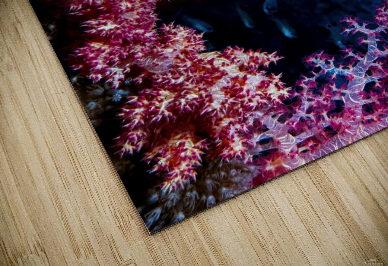 Coral Hind HD Sublimation Metal print