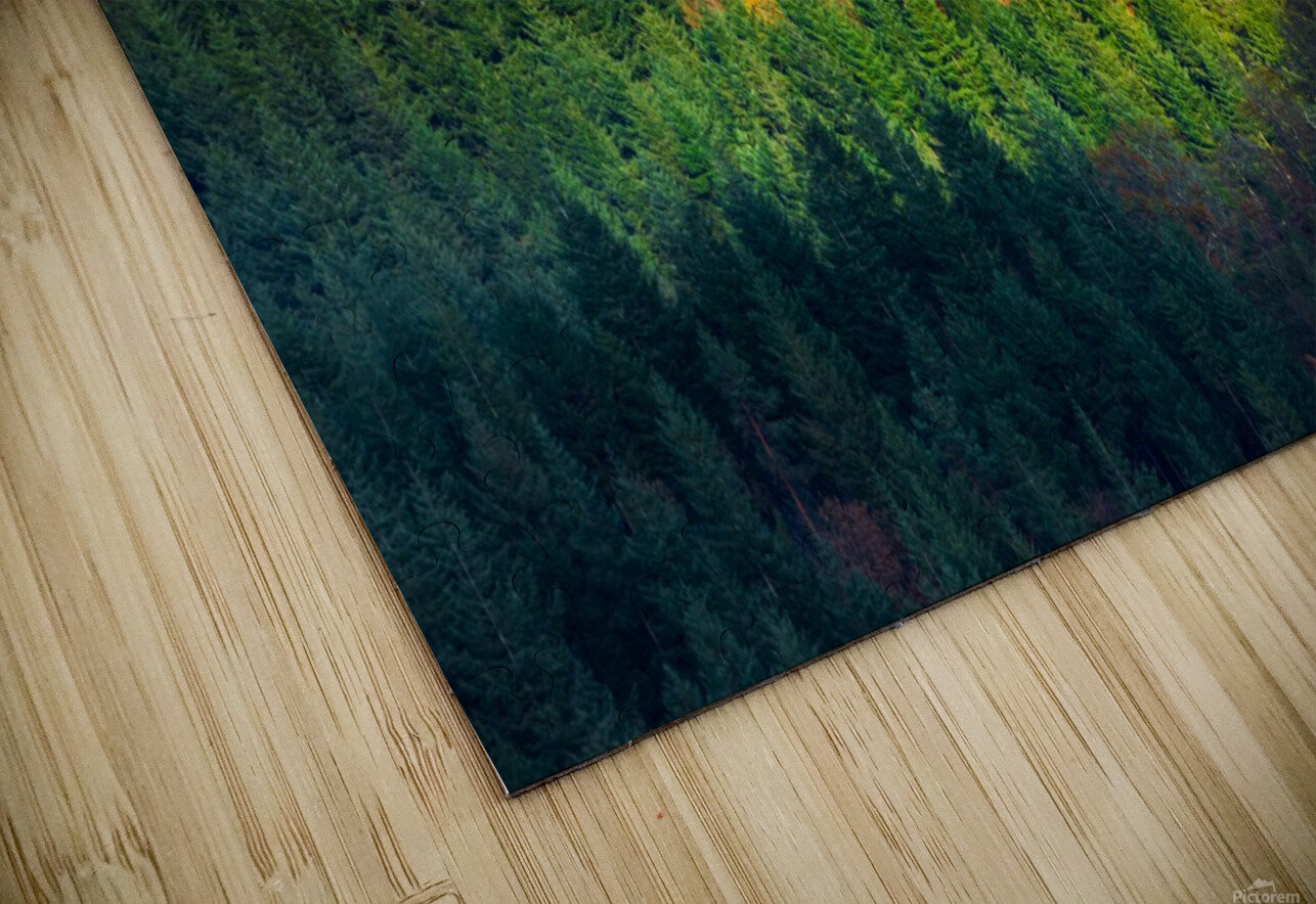 Amongst the trees HD Sublimation Metal print