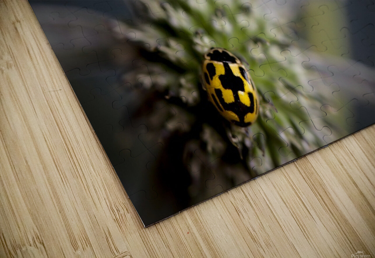 ladybug HD Sublimation Metal print