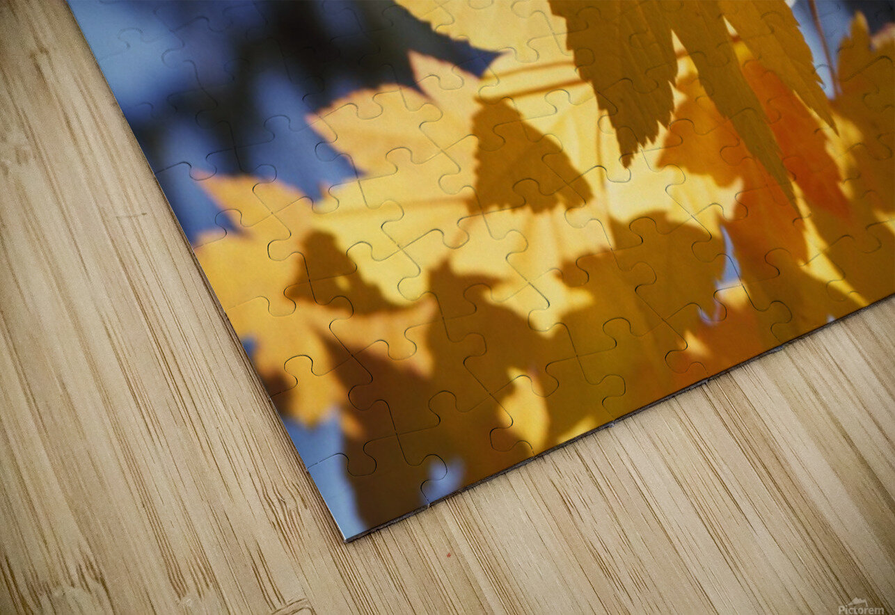 Vine Maples Leaves In Autumn HD Sublimation Metal print