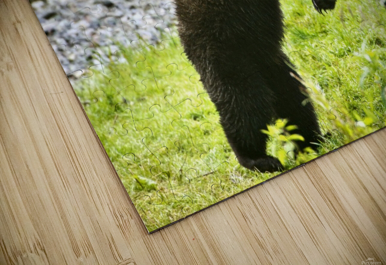 Two Grizzly Bears Fighting HD Sublimation Metal print