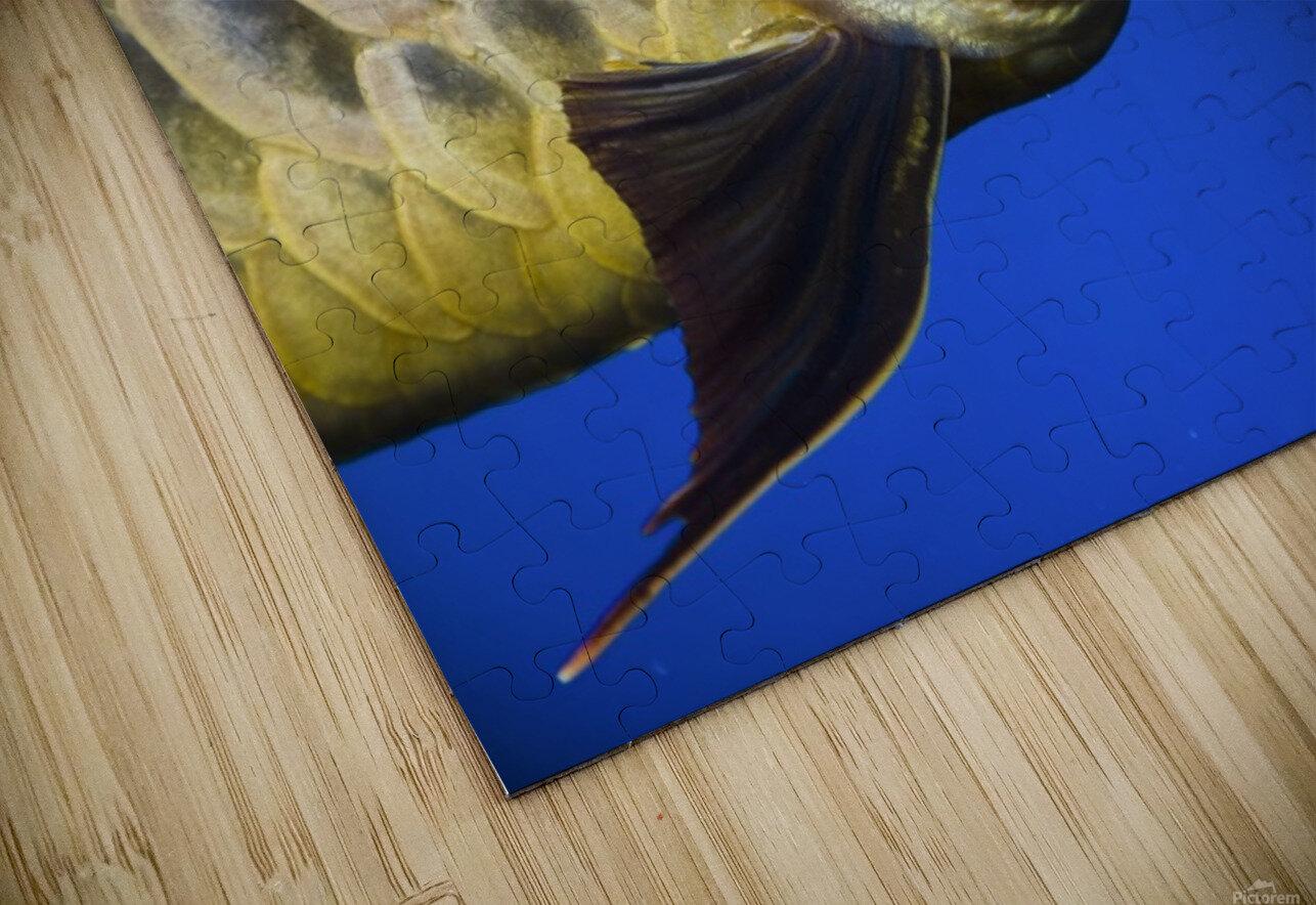 Closeup Of A Fish HD Sublimation Metal print