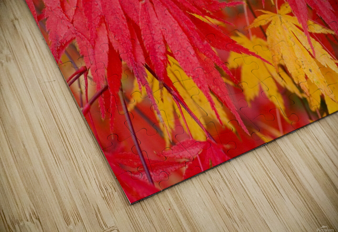Close-Up Fall Leaves HD Sublimation Metal print