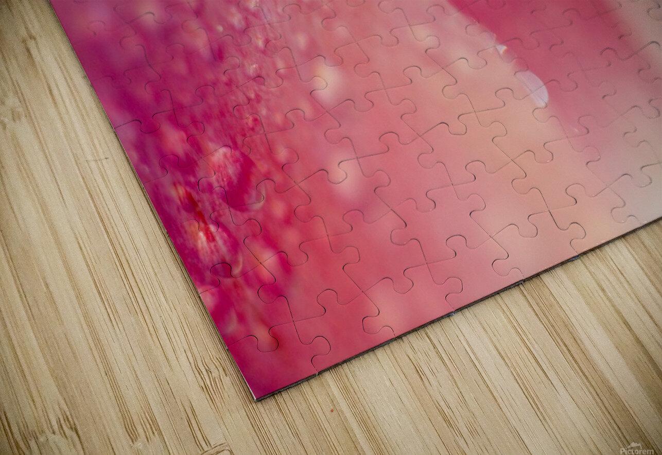 Closeup Of Dew On Tulip Petal HD Sublimation Metal print
