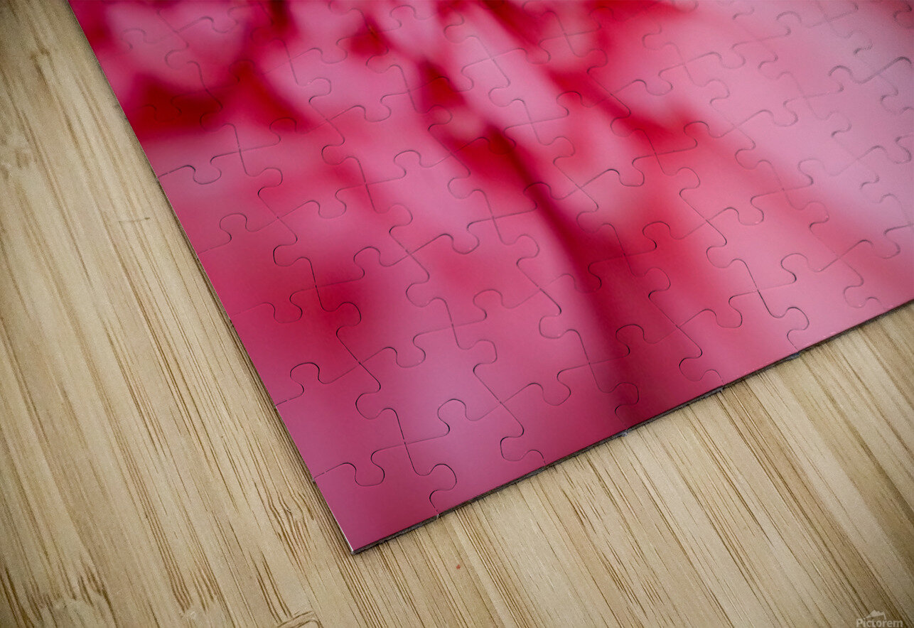 Close Up Of A Pink Flower HD Sublimation Metal print