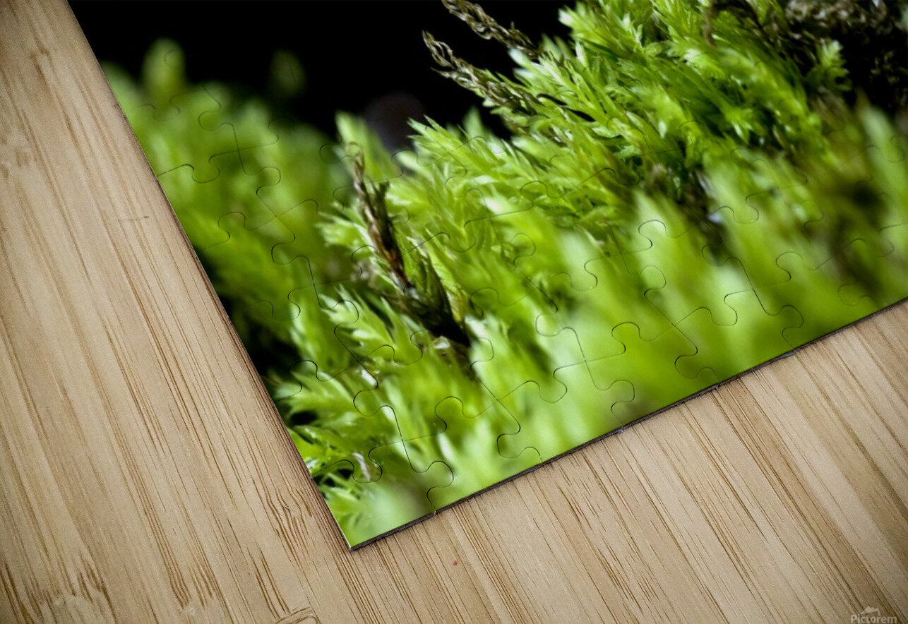 Closeup Of Mushroom HD Sublimation Metal print