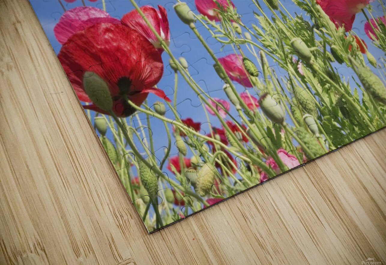 Red Flowers Against Blue Sky HD Sublimation Metal print