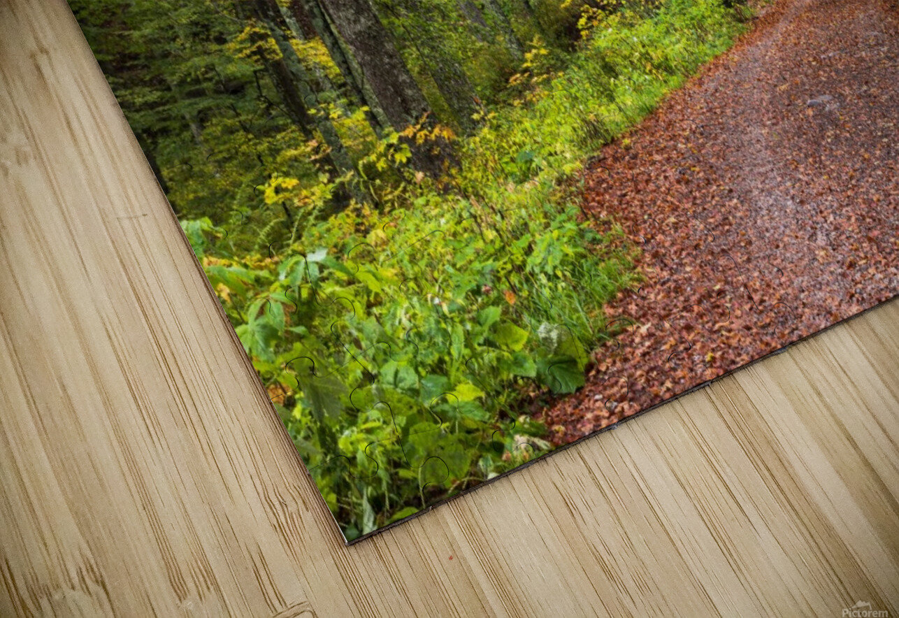 Fall Forest HD Sublimation Metal print