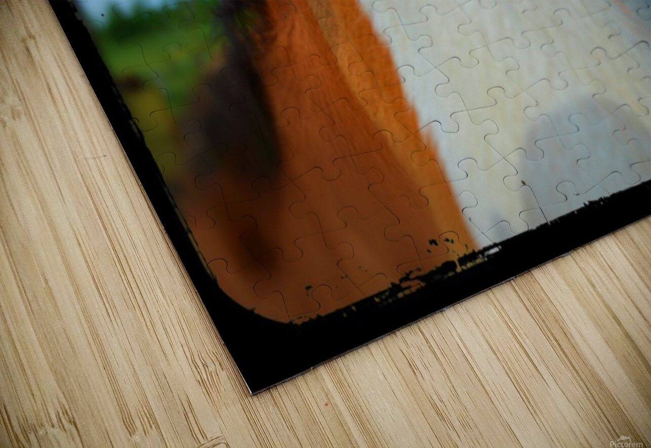 Baby Clydesdale Impression de sublimation métal HD