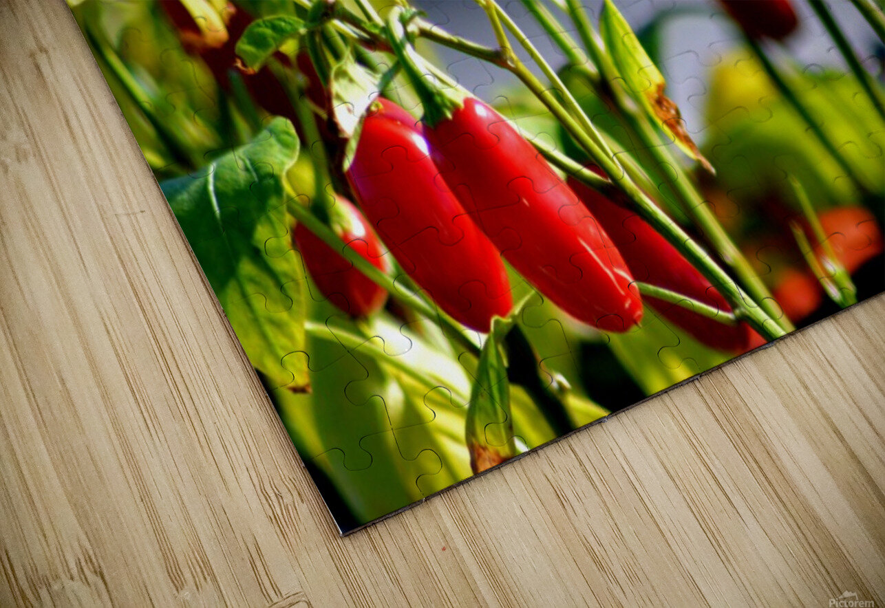 Peppers HD Sublimation Metal print