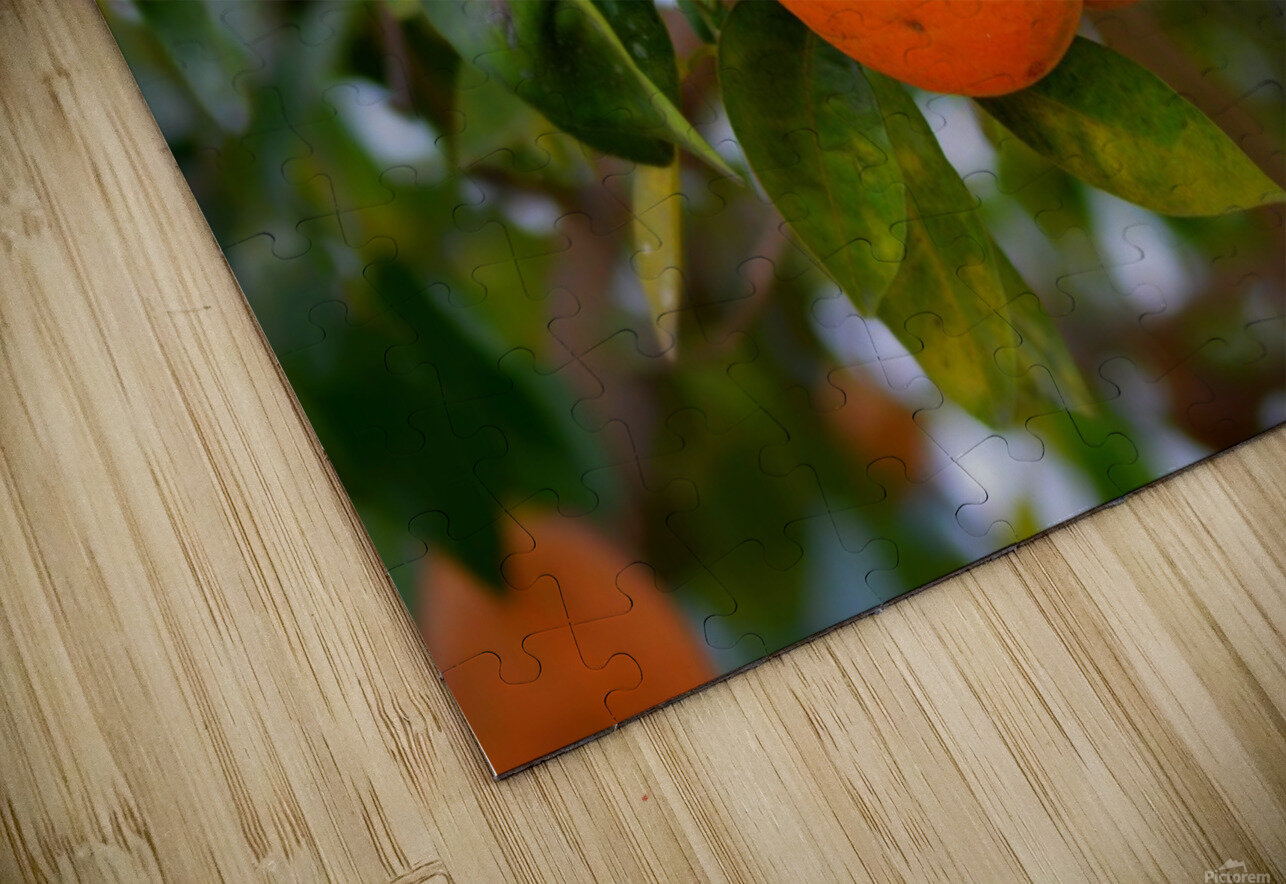 Oranges HD Sublimation Metal print