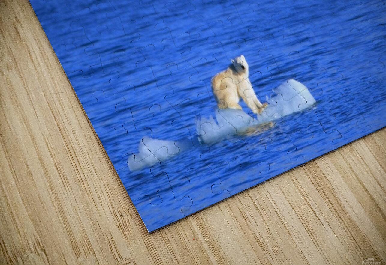 Polar Bear (Ursus Maritimus) Standing On A Piece Of Floating Ice; Coburg Island, Nunavut, Canada HD Sublimation Metal print