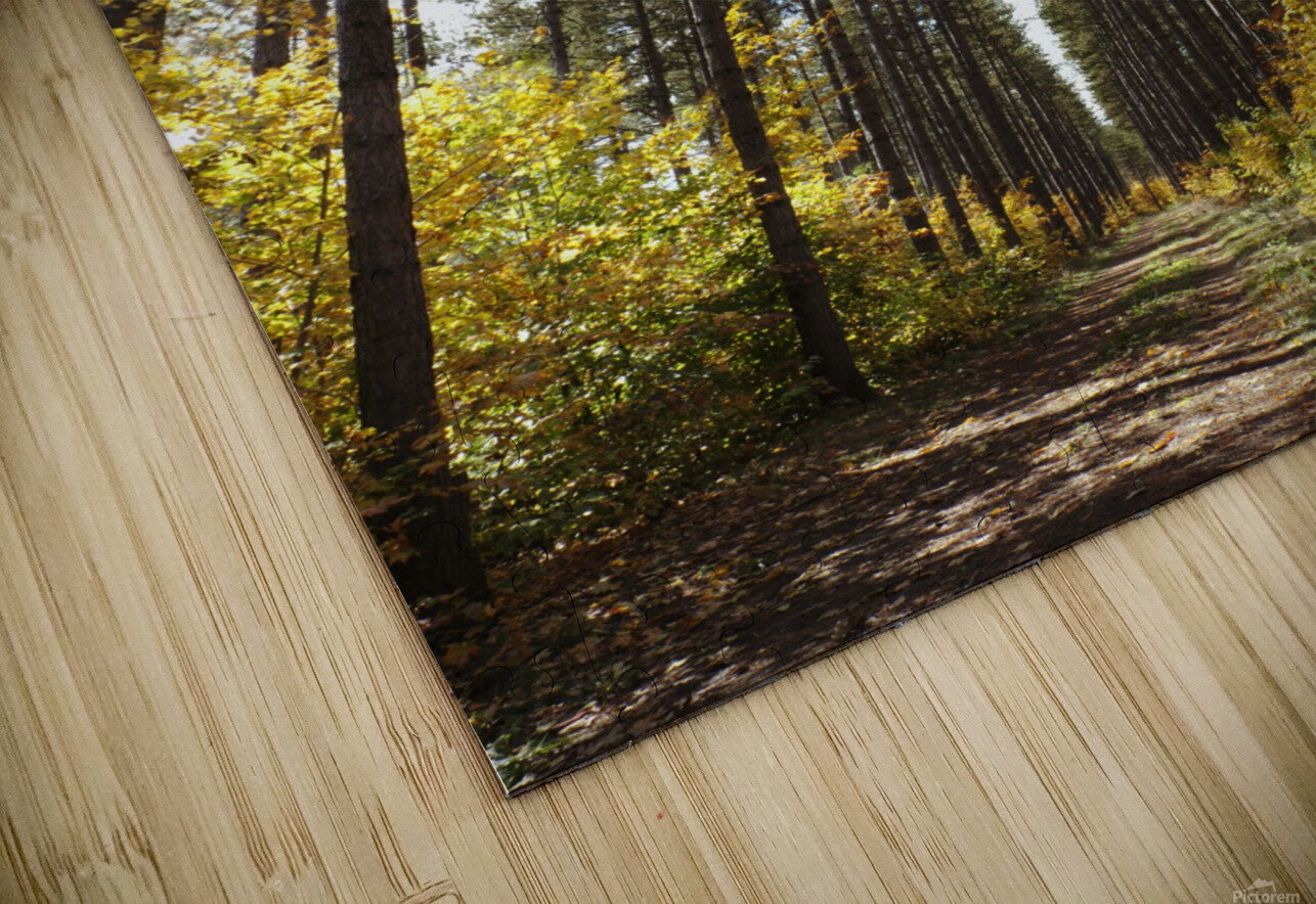 Path Through A Forest In Autumn; Sault St. Marie, Ontario, Canada HD Sublimation Metal print