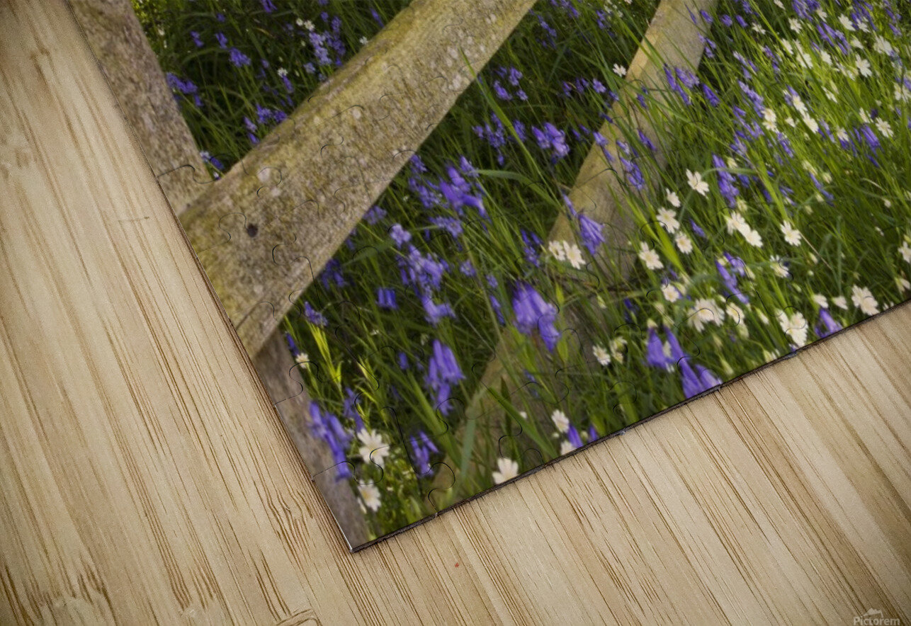 A Wooden Fence In A Forested Area With Blue And White Wildflowers On The Ground; Northumberland, England HD Sublimation Metal print