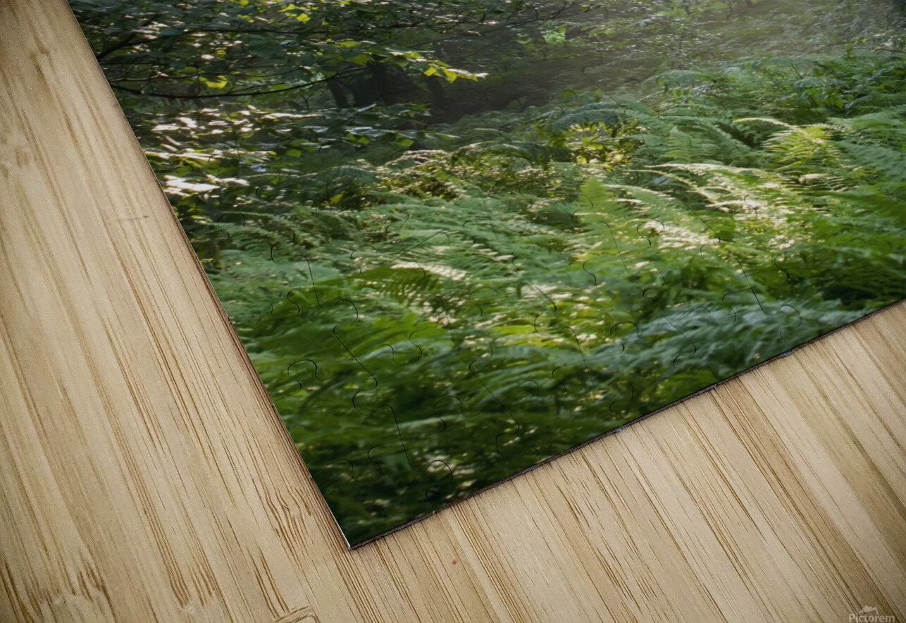 Trees In The Woods In The Early Morning Fog; Iron Hill, Quebec, Canada HD Sublimation Metal print