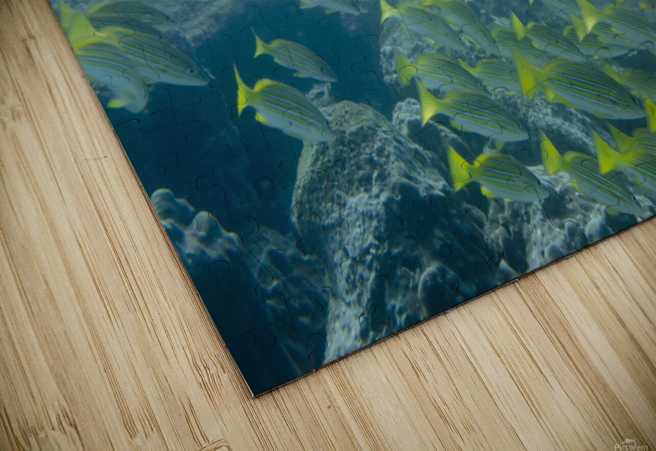 A School Of Fish Swimming Underwater; Galapagos, Equador HD Sublimation Metal print