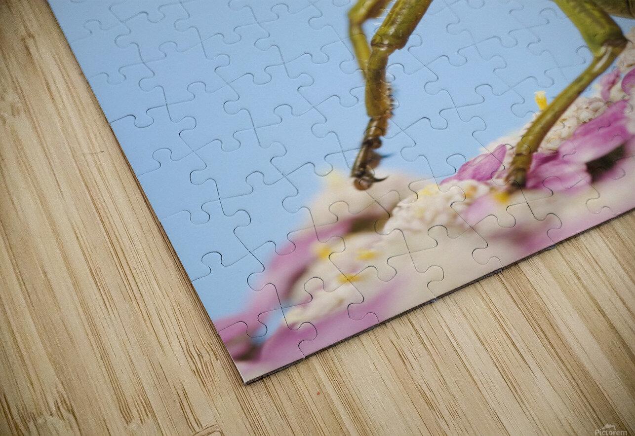 Grasshopper Close-Up. HD Sublimation Metal print