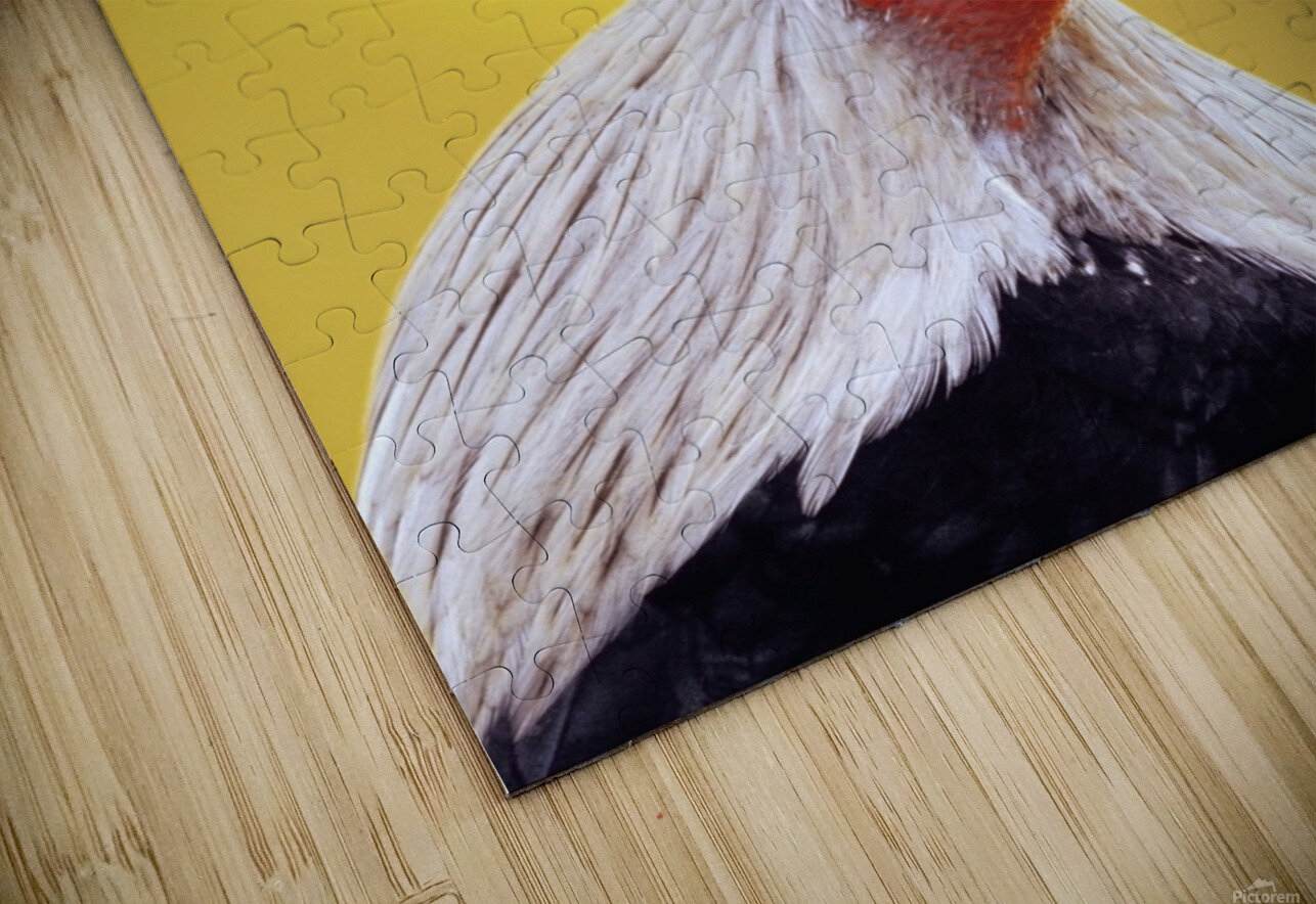 Crowing rooster;British columbia canada HD Sublimation Metal print