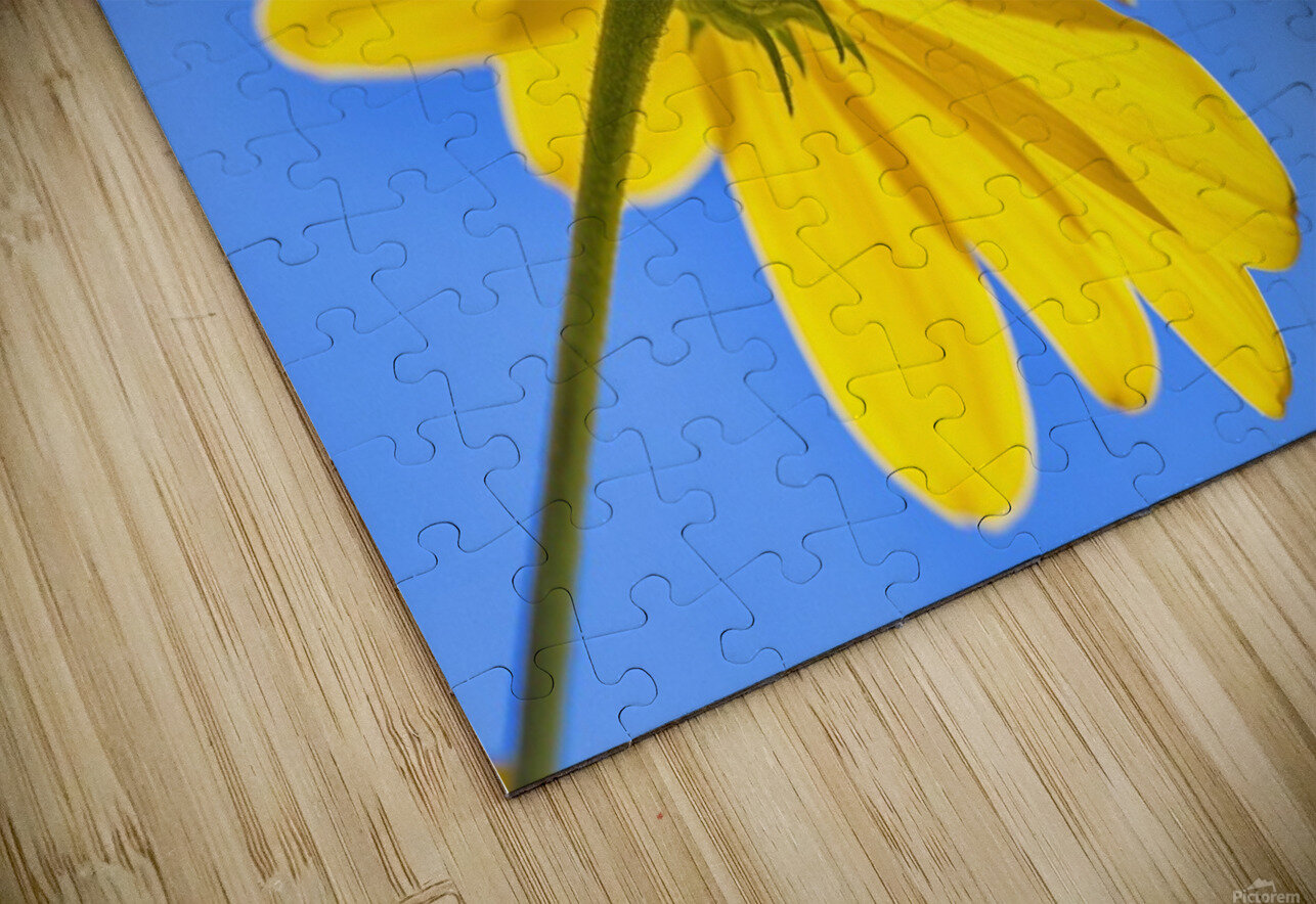 Yellow flower against a blue sky; Bolivia HD Sublimation Metal print