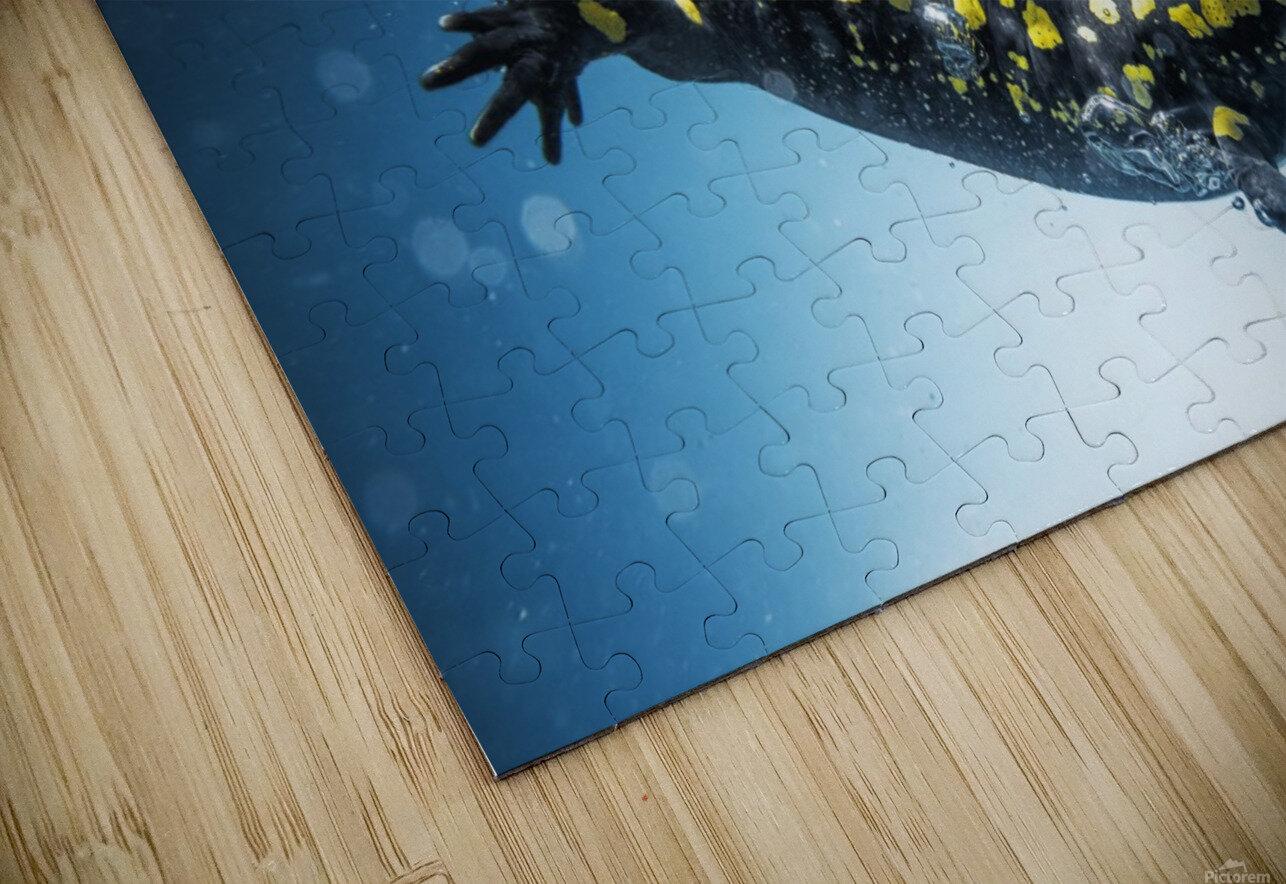 Salamander (Caudata) swimming in water; Tarifa, Cadiz, Andalusia, Spain HD Sublimation Metal print