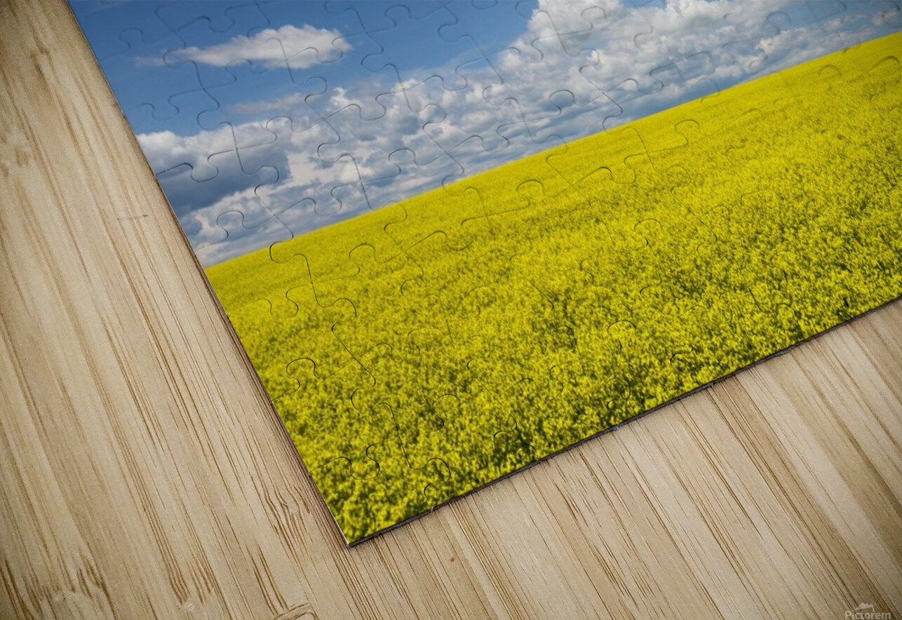 Flowering canola field with clouds and blue sky; Alberta, Canada HD Sublimation Metal print