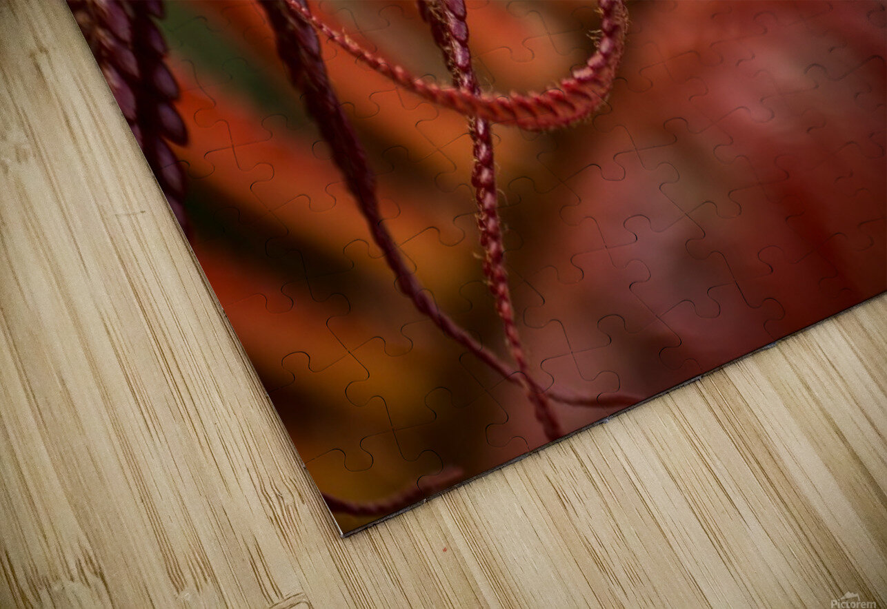 Close up of a crimson Amau fern; Hawaii, United States of America HD Sublimation Metal print