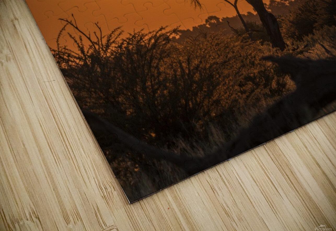Silhouette of acacia tree at orange sunset; Botswana HD Sublimation Metal print