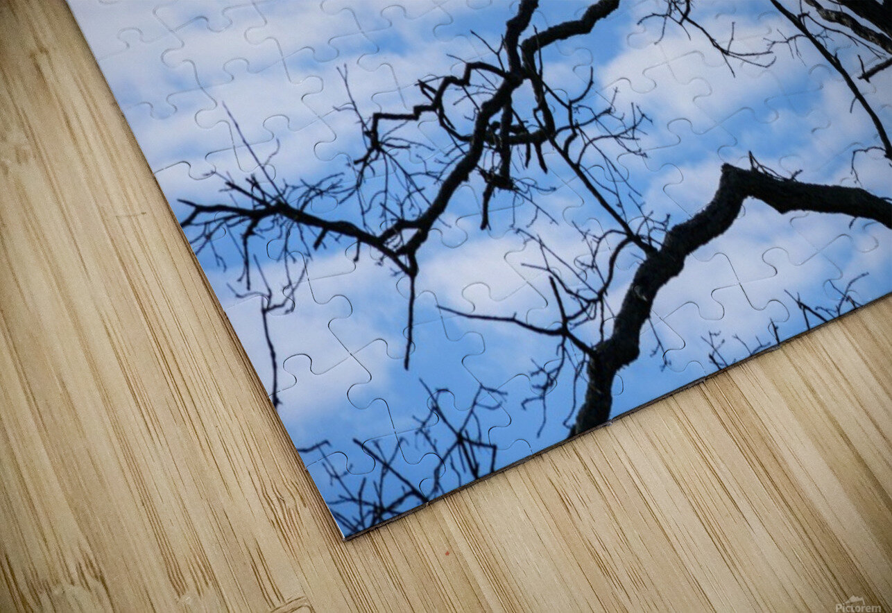 A dead tree is silhouetted against the sky; Tahlequah, Oklahoma, United States of America HD Sublimation Metal print