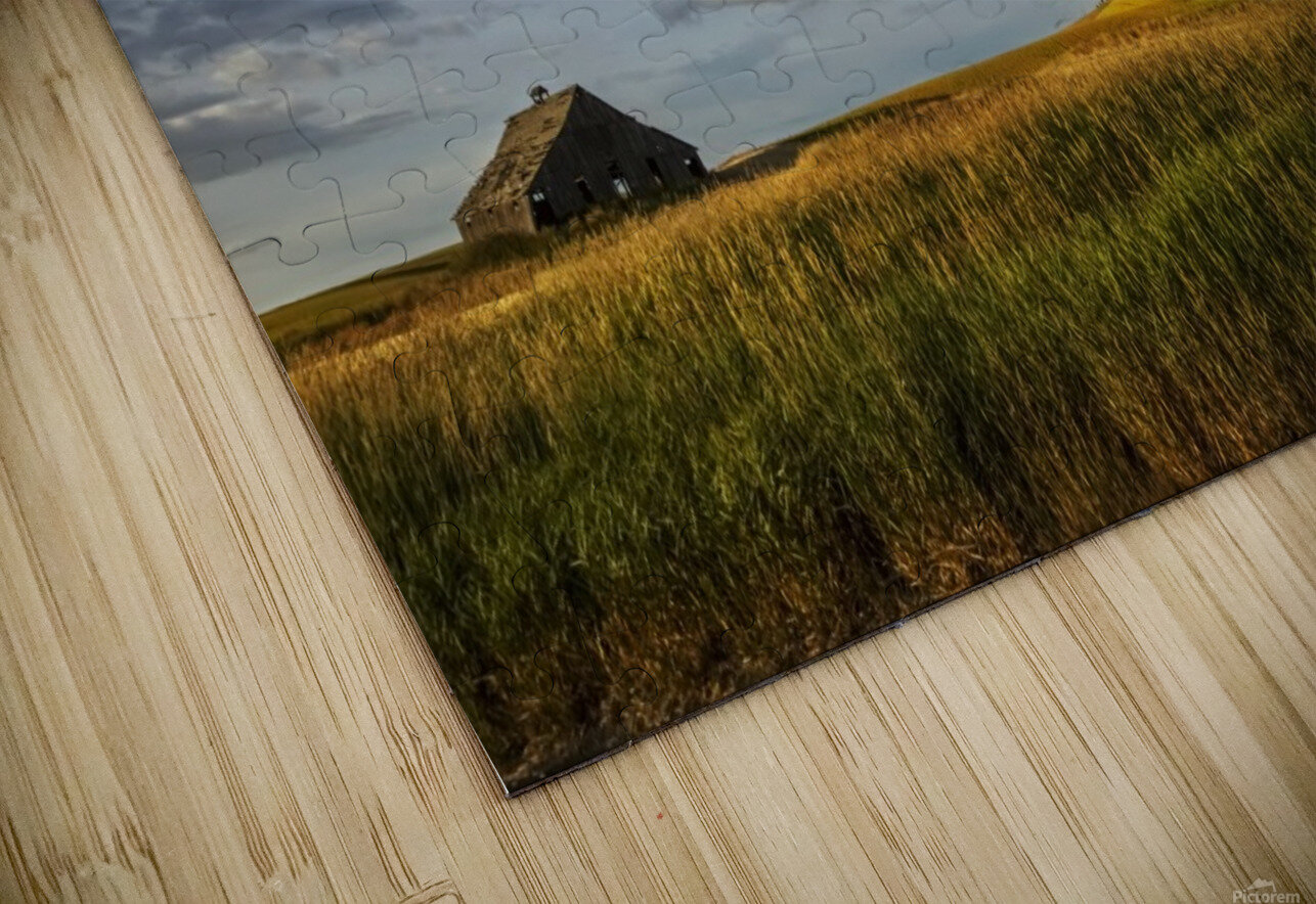 Wheat field and old wooden barn; Palouse, Washington, United States of America HD Sublimation Metal print