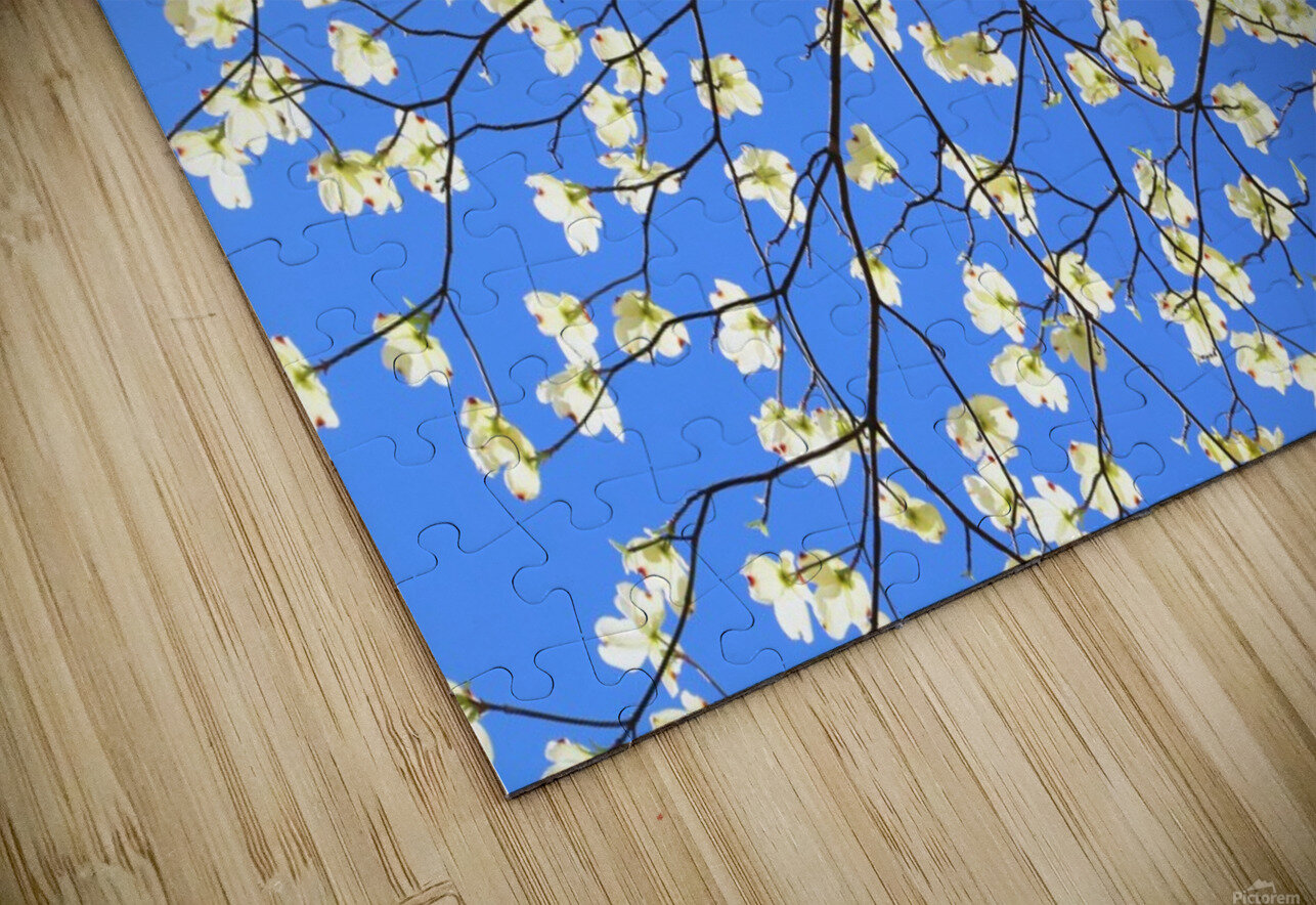 Blue Sky and Dogwood HD Sublimation Metal print
