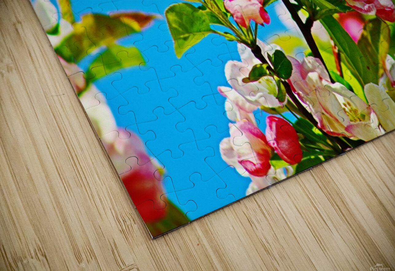Colors of Spring HD Sublimation Metal print