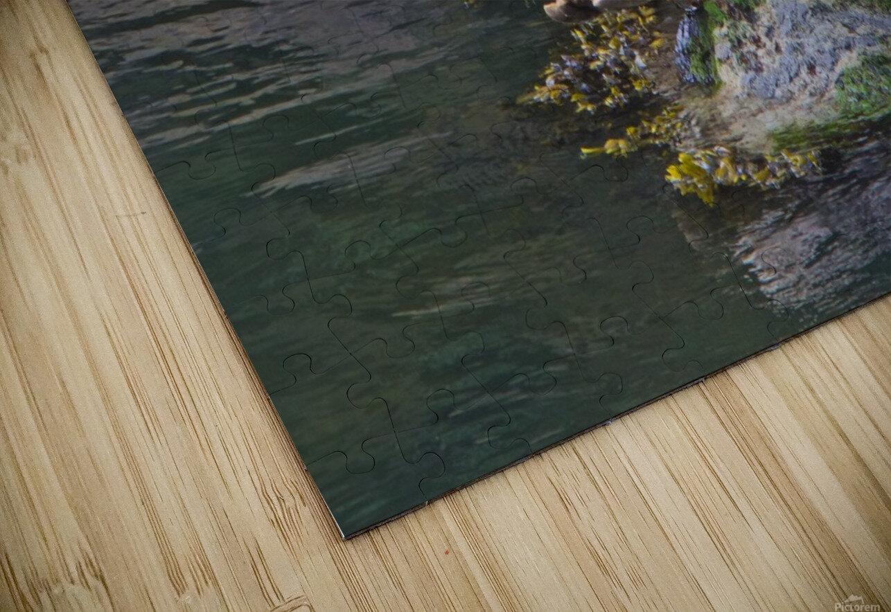 Sea lion near Depoe Bay, OR HD Sublimation Metal print