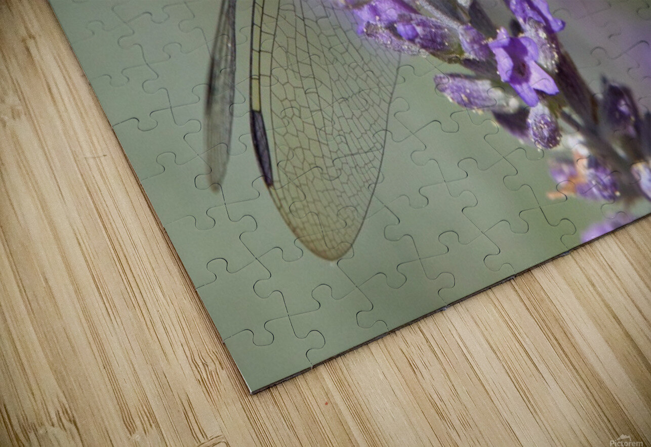 Dragonfly resting on flower. HD Sublimation Metal print
