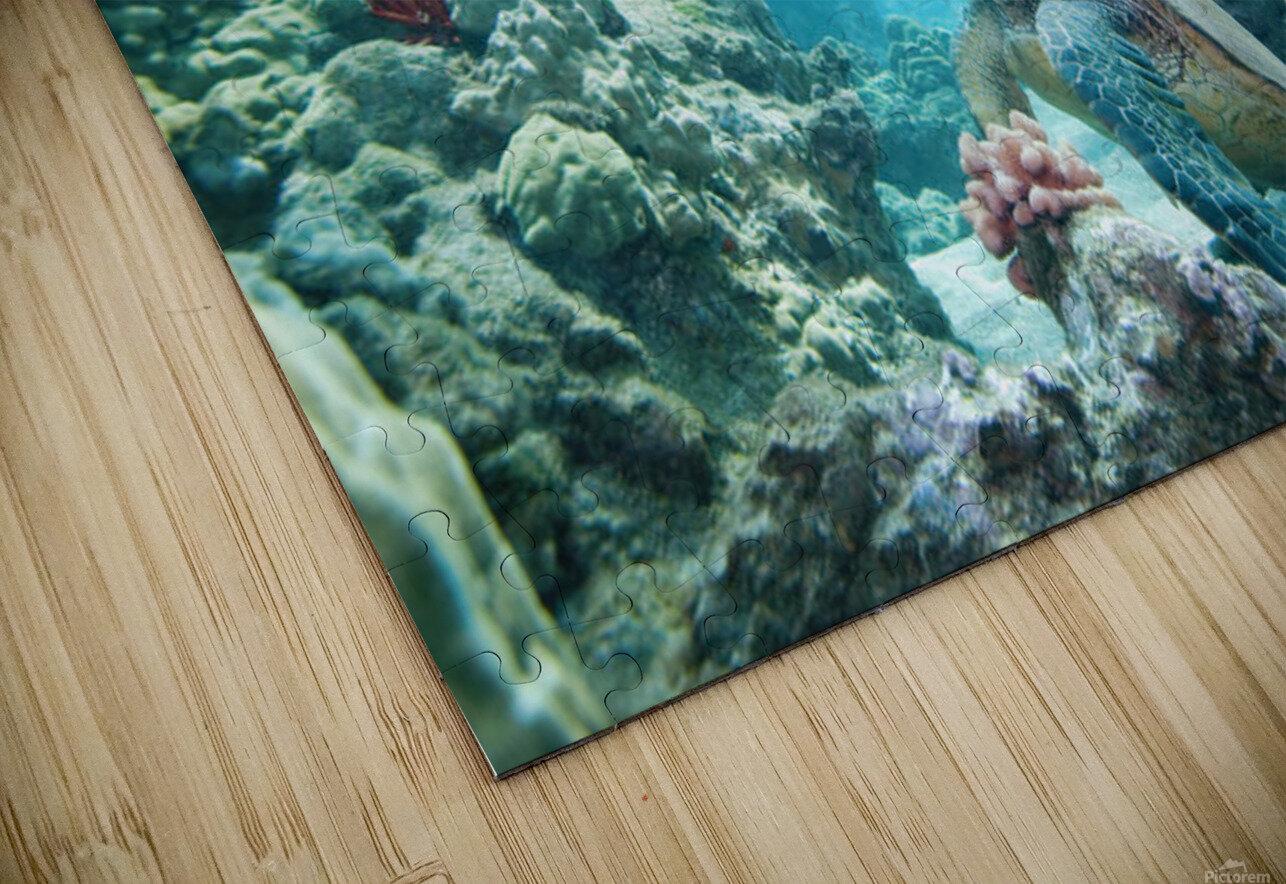 Hawaii, Green Sea Turtle (Chelonia Mydas) An Endangered Species. HD Sublimation Metal print