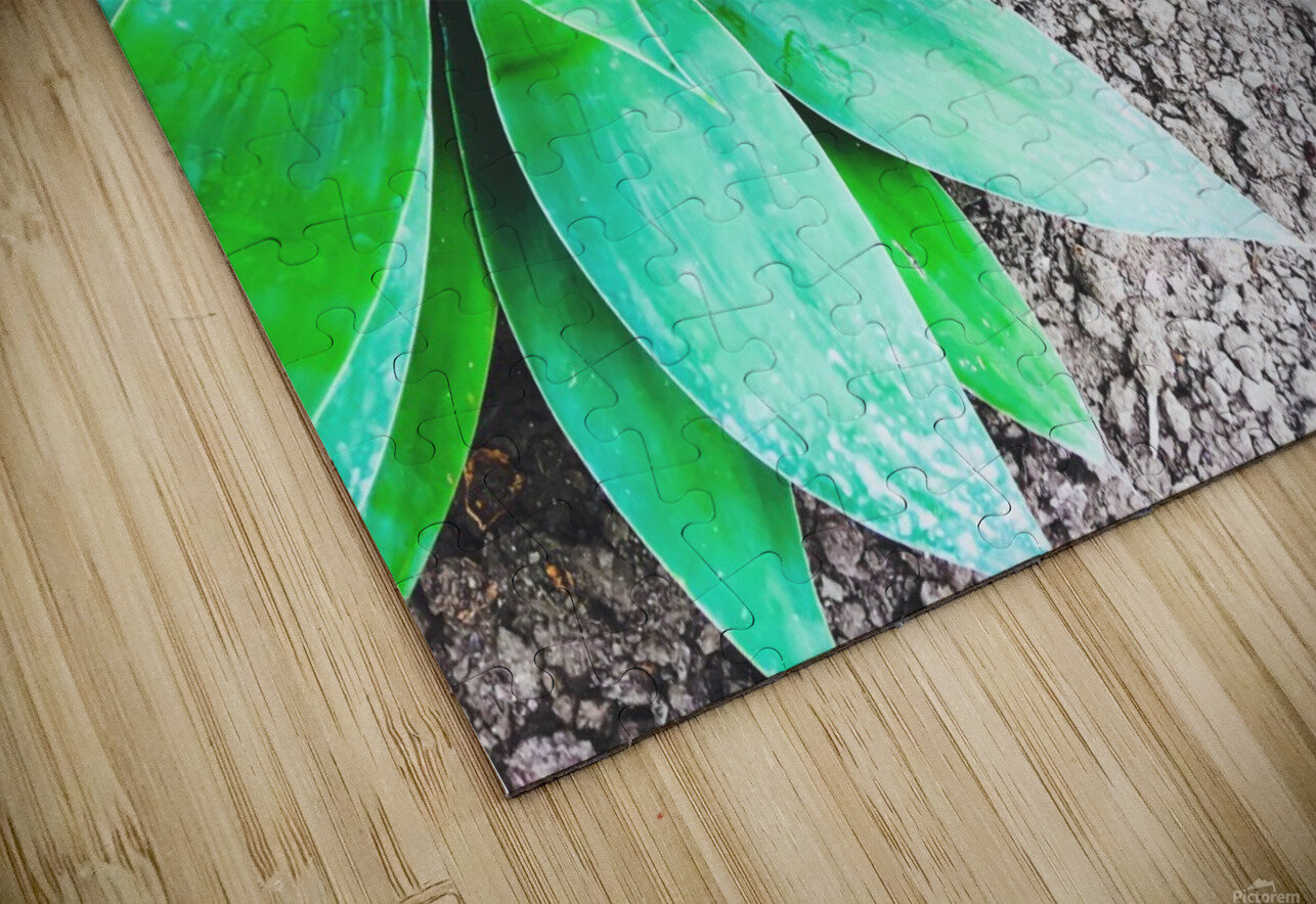 green leaf plant with sand background HD Sublimation Metal print