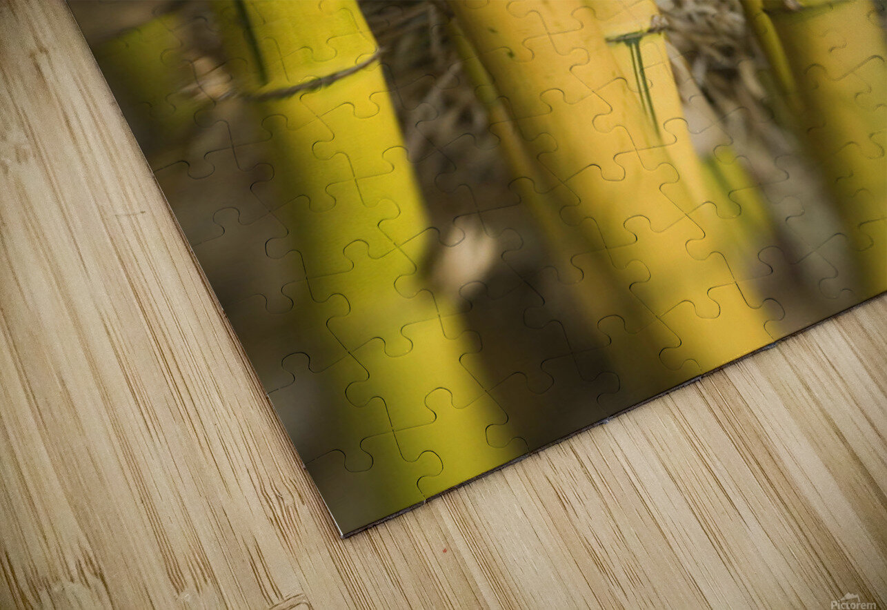 Close-Up Of Bamboo Stalks. HD Sublimation Metal print