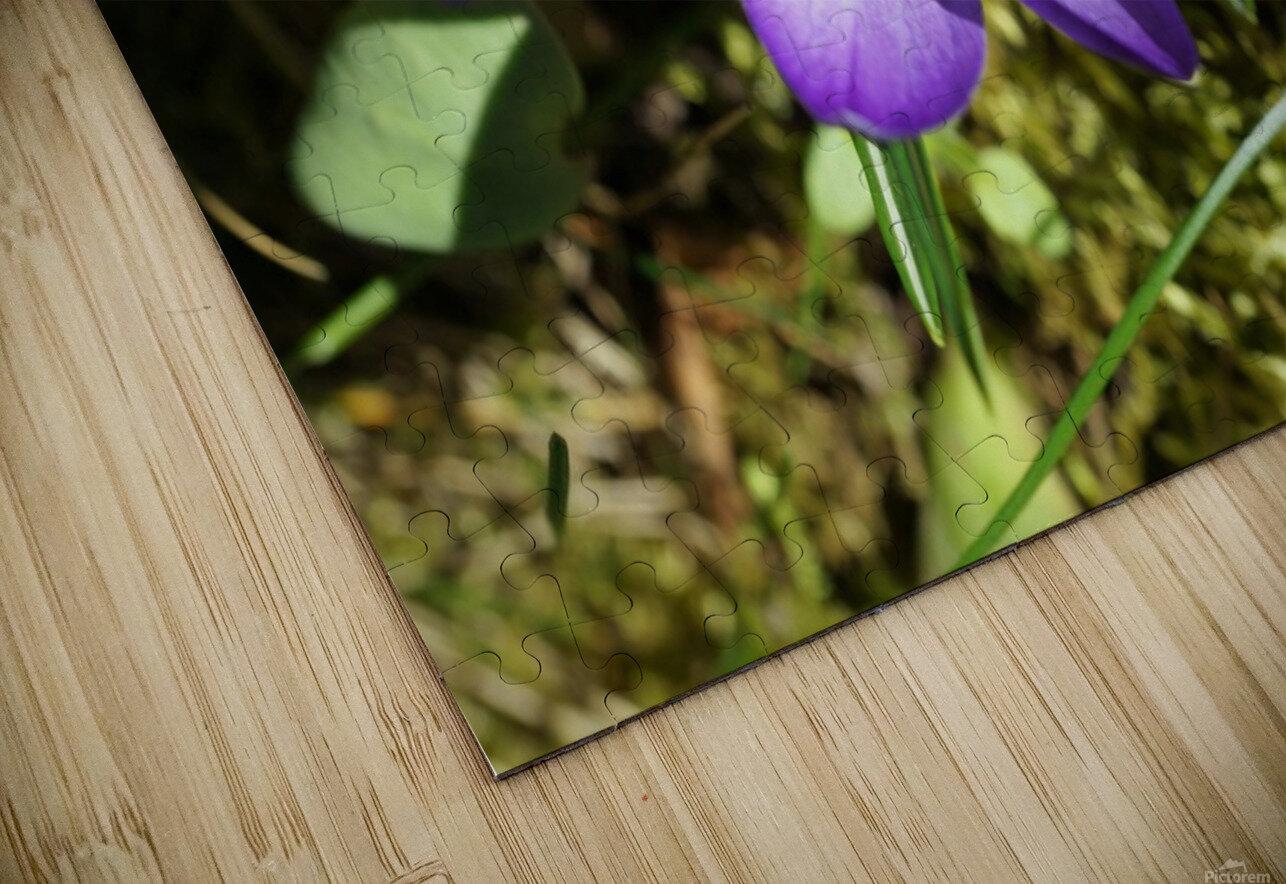 DSC06574 HD Sublimation Metal print