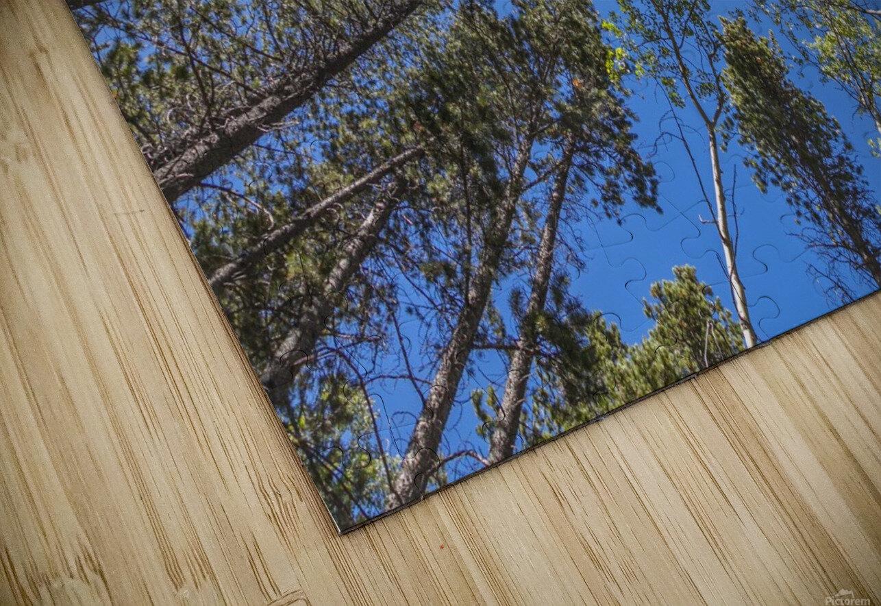 Tree Tops Near Grassi Lake Trail, Alberta HD Sublimation Metal print