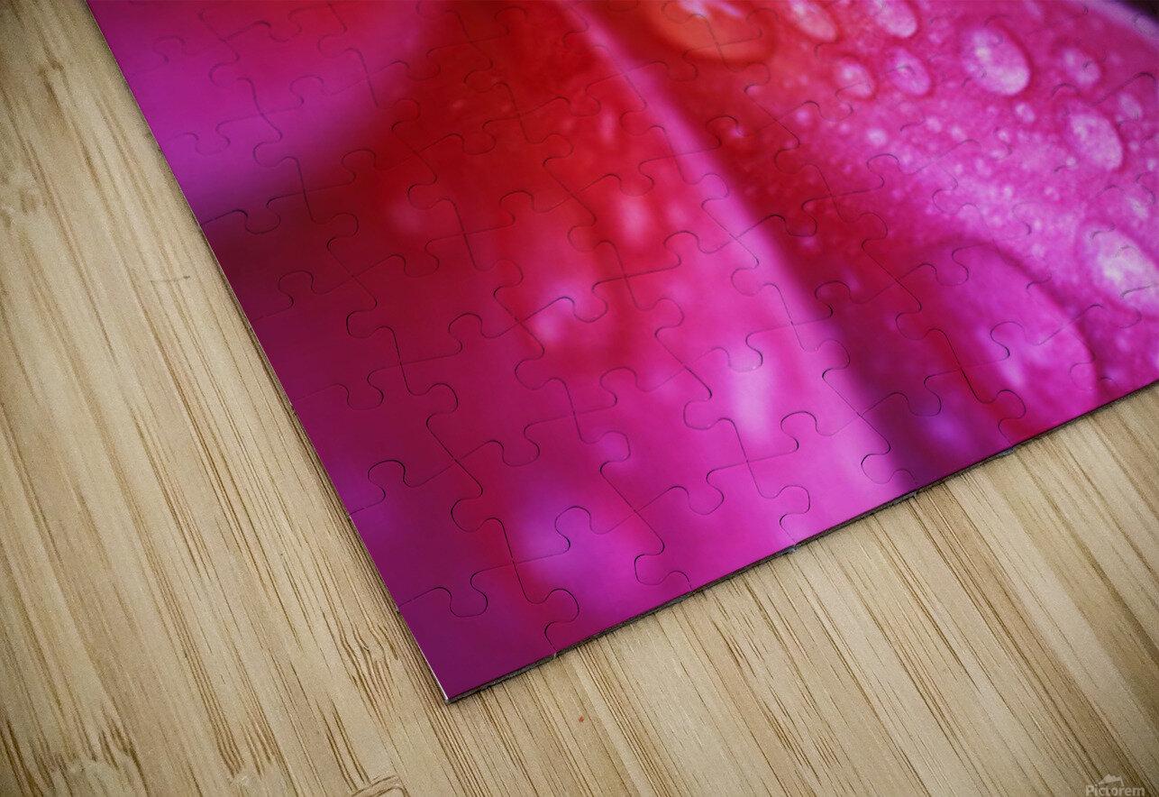 Hawaii, Maui, Extreme Close-Up Purple Pink Plumeria Blossom Water Droplets Aka Frangipani HD Sublimation Metal print