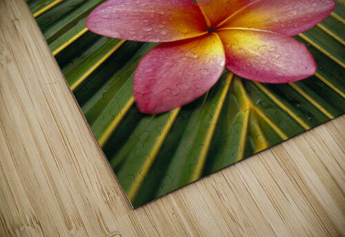 Close-Up Three Pink Plumeria Flowers On Coconut Palm Leaf Selective Focus jigsaw puzzle